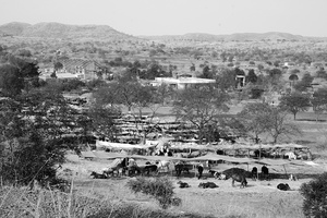 A cattle camp as seen from the top, Maharashtra 2016.