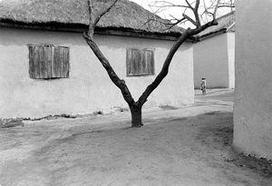 Andoabatanomby, 1996
