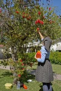 Observing the Bottle Brush Tree