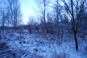 'There's a cold sweep of stillness in the trees that feels absolute and which seems to reach to the very edge of us'