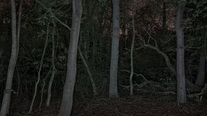 Foresta - reverse 04-1