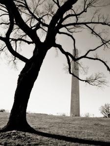 Tree and Washington Monument