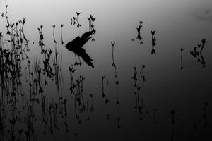 Reflet d'un autre monde - Reflect of another world