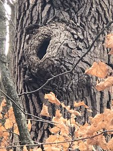 Opened tree