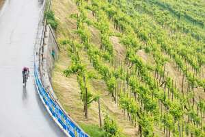 Stage: Veneto. Valdobbiadene. This long and challenging time trial stage is raced against the background of a Prosecco vineyard.