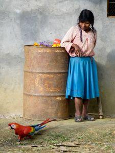 The Peruvian Coca Farmer