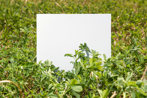 Stage: Tuscany. On the  hills of Volterra, in the southern part of Tuscany, we find Medicago sativa. Also called lucerne, this is a perennial flowering plant, cultivated as an important forage crop in many countries around the world.