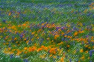Wildflower Meadow, A multiple