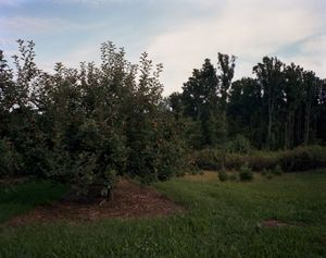 © Dana Mueller                                  Apple orchard, Cumberland County, Pennsylvania  2009