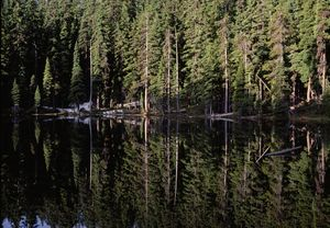 Sky Lakes med tele reflection of trees, Oregon