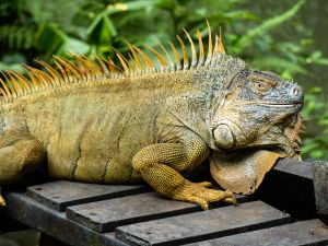 Sarapiqui Nature Reserve Costa Rica