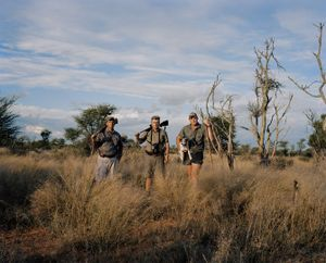 hunting lion, kalahari, northern cape, south africa-from the series 'hunters'-David Chancellor