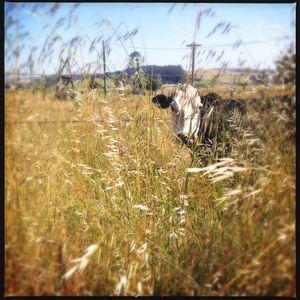Sonoma Field