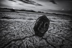 A buddha in the wilderness