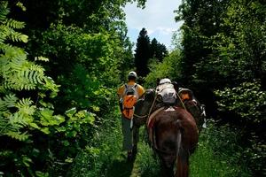 Back to nature, school excursion, nature reserve, moor landscape,  Maules, Gruyère. Excursion dans le marais de Maules.