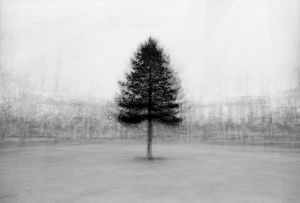 stadtbaum#14