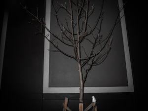 Winter Tree. © Ross Duncan