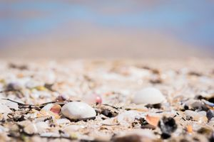 Amongst the Shells