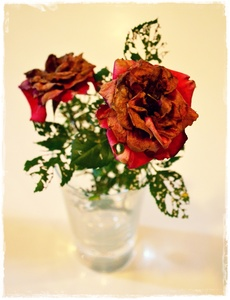 Dessicated Roses