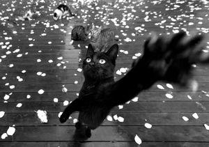 stray cat-5
