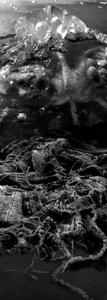 The Singe of Forgotten Waste