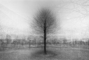 stadtbaum#12