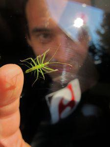 Bug Whisperer