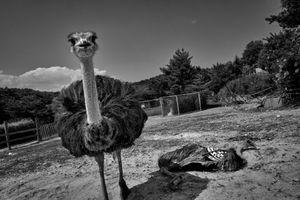 "Abandoned farm, from the series Fukushima ""No Go"" Zone, © Pierpaolo Mittica."