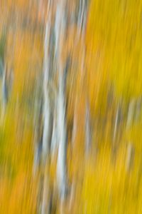Abstract of Autumn