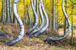 Nature's Anomaly