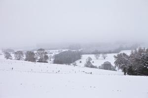 Winter Meditation