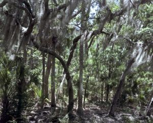 © Dana Mueller                                 Forest, St. Helena Island, South Carolina  2010