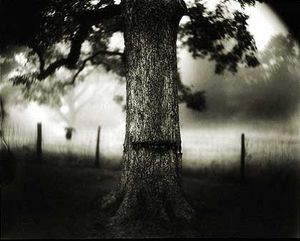 """Untitled (#1, #30, and #34),"""" 1998. From the """"Deep South"""" series. Tea-toned gelatin silver print; 38 x 48 inches. © Sally Mann"""