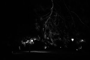 #noplaces - lightning tree