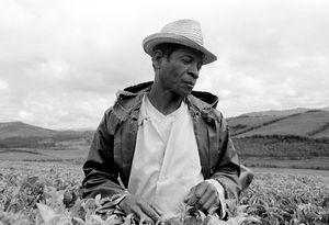 """""""Tea Plantation Worker"""" Fianarantsoa 1994"""