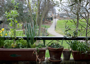 Cressingham Gardens, London SW2.