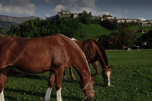 Horses in front of Gruyères castle.