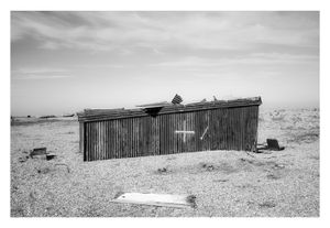 Dungeness #9