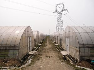 Invernaderos orgánicos