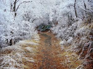 Frozen Fogscape 3