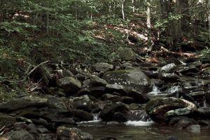 Rocks Trees Water