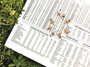 Economy up, milkweed down