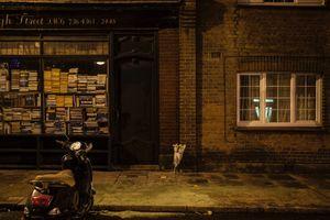 Murder #183, Colin Hammond, Fulham
