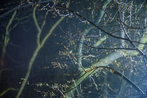 Night Trees of New York: Riverside Rain