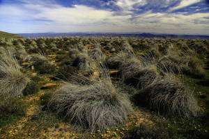 Wind and bush / At a height of 1,500 m  on the Great Karoo central plateau, the wind bloes all the time over the bush.
