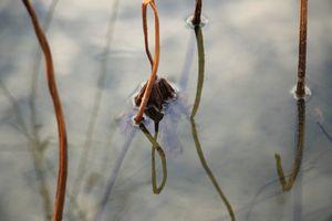 Lotus lake in autumn_3