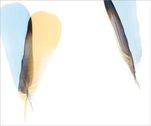 Wood Pigeon Fall V