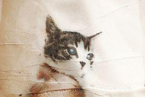 [Kiji] It was a idle at home cute petite    © Takashi Kuraya
