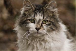 THE CINDARELLA CAT