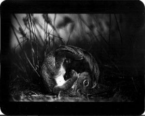 """Untitled"" (Squirrel), 2011 © Giacomo Brunelli"
